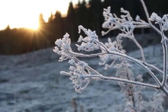 Frostlandskap